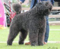 Kingsley from the Dogsfarm
