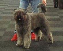 Kiki from the Dogsfarm
