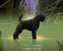 Cash-advert