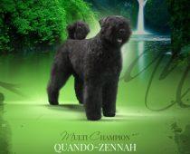kleinQuando-Zennah-van-de-Vanenblikhoeve