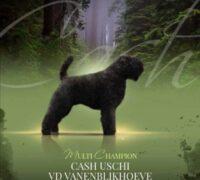 cash Uschi van de Vanenblikhoeve